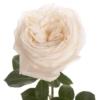 """Роза """"White O'Hara"""""""