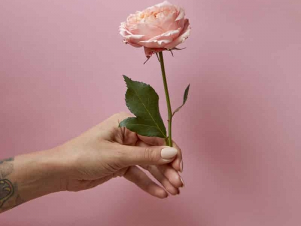 Rose with green leaves in the hand of a woman around a pink background with space for text. Present